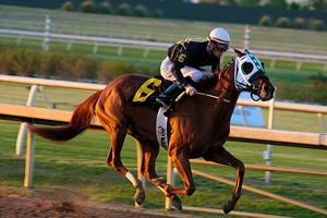 Hores racing in Lone Star Racing Park, Grand Prairie TX
